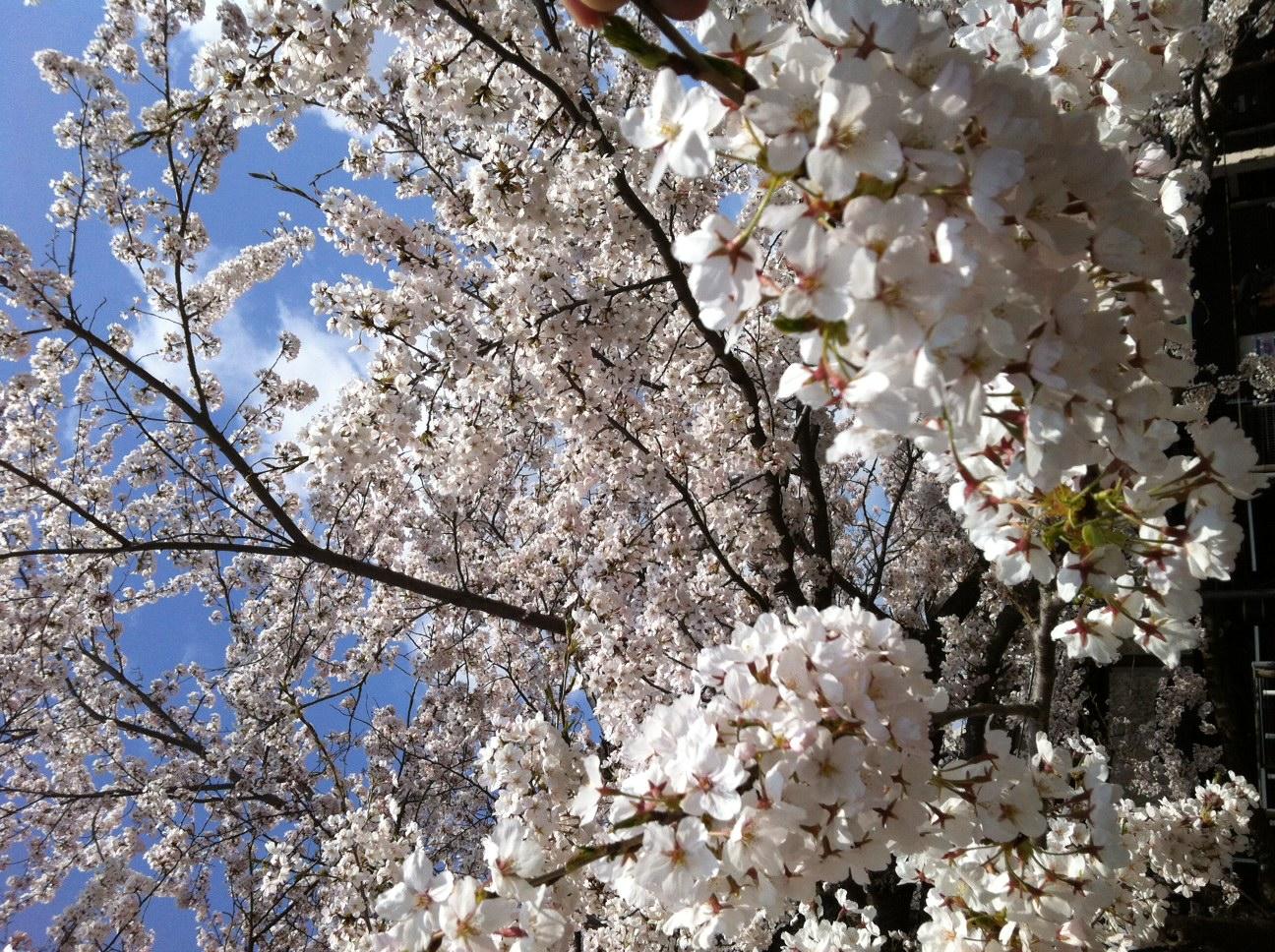 桜まつり満喫♪お花見プラン♪
